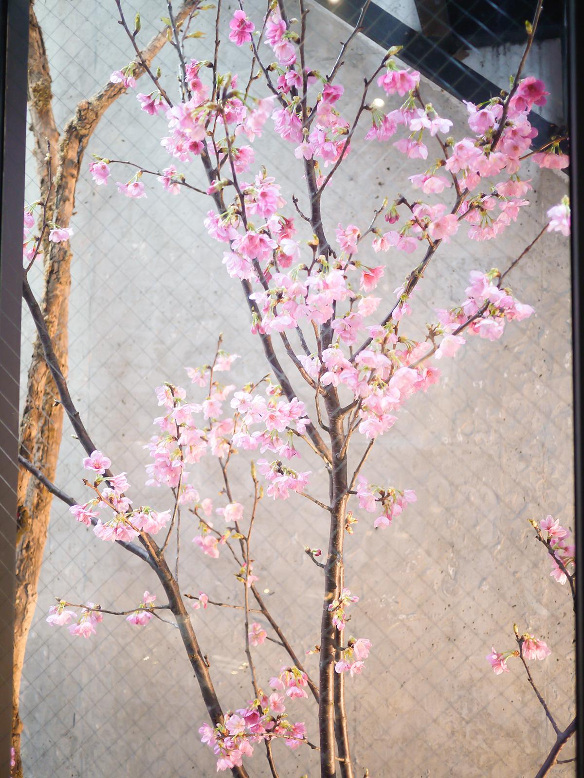 内庭の木もお花見仕様